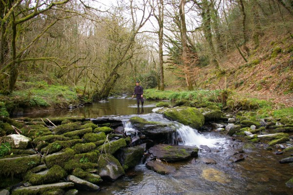 Morlogws-Farm-Holidays_Nature_Walk