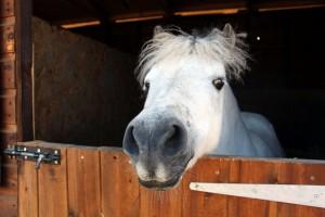 Morlogws-Horse-Stable