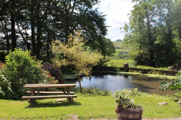 Morlogws-Farm-Holidays_Pond